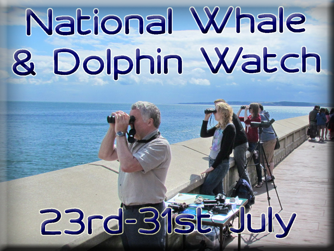 Access our Sightings News Letters Sea Watch Foundation