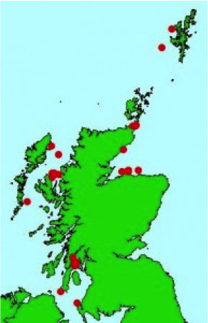 Humpback whale sightings around Scotland in 2015