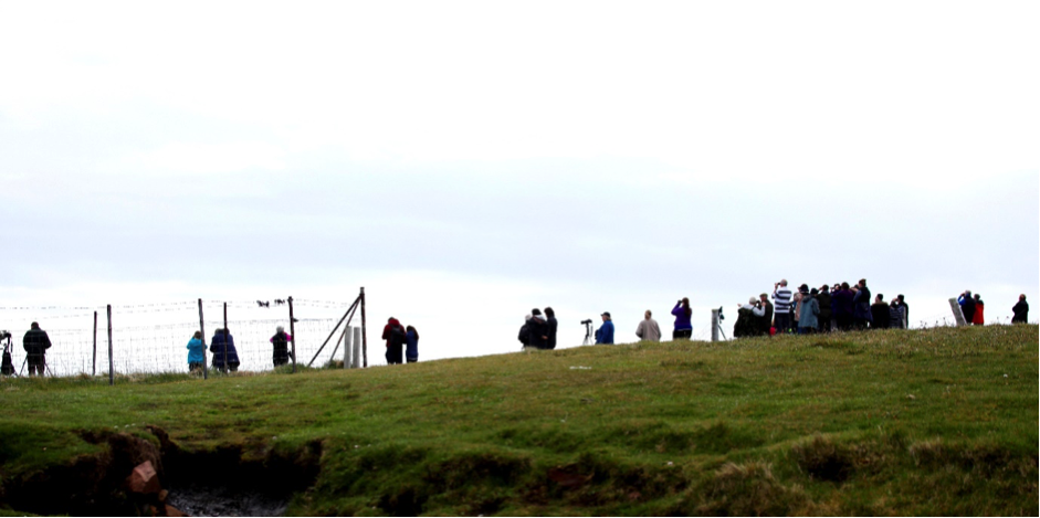 Over 50 visitors watched Orca at Duncansbyhead on Sunday. Photo by Colin Bird