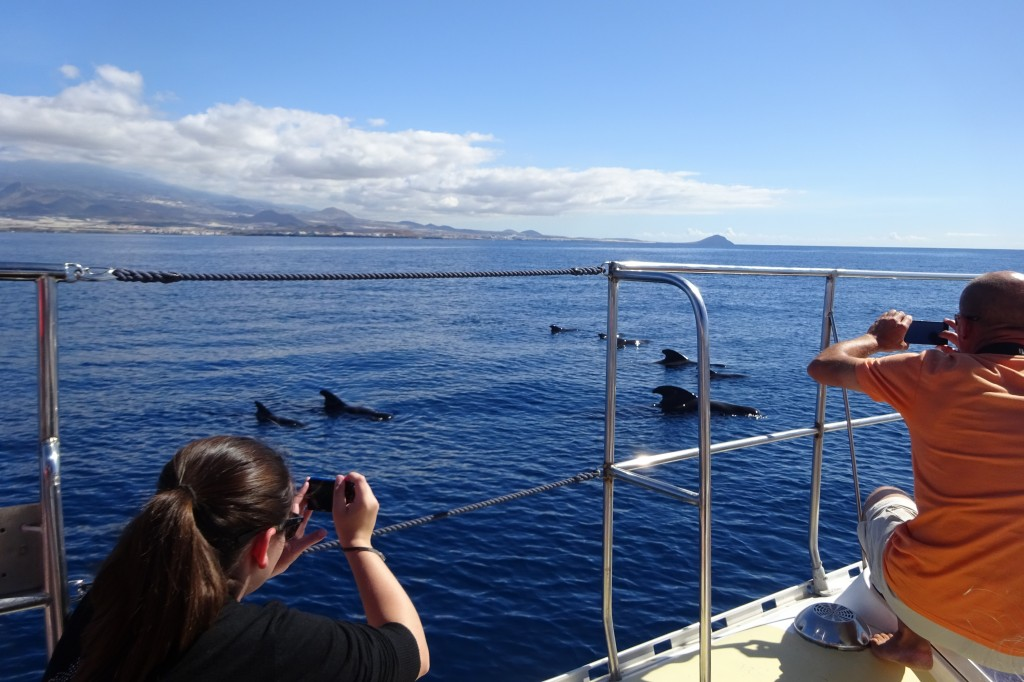 the negative impact of whale watching activities on cetaceans 114 to determine the impact of whale-watching activities (on risso's dolphins) around the 115 azores, we investigate d the effects of vessel presence and abundance on the 116 behavior of risso's dolphins.