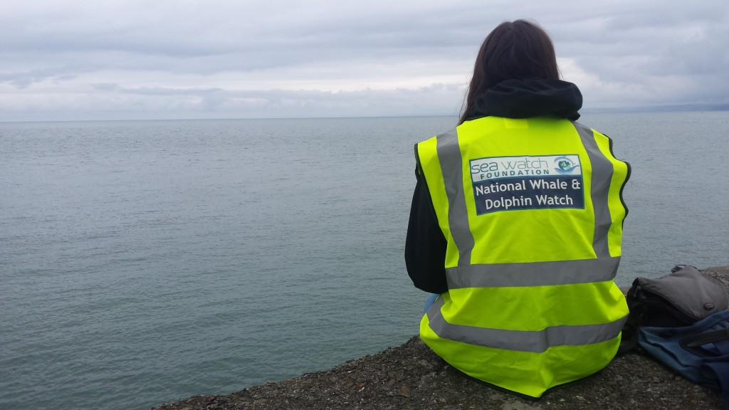 A volunteer on land watch on New Quay Pier, 2016.