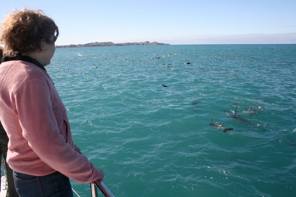 Watching dolphins from a boat in New Zealand.