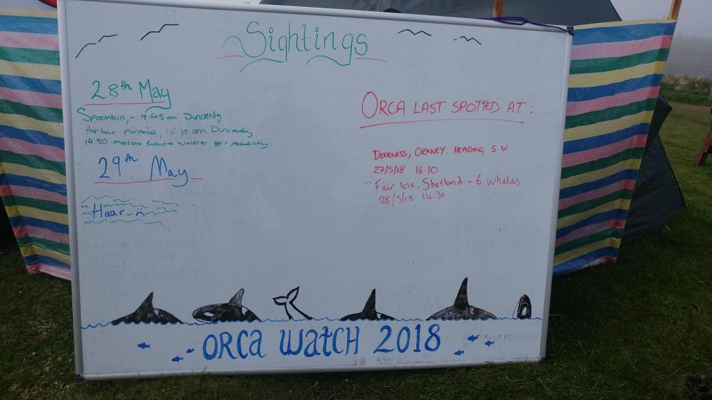Orca Watch Sightings board. Photo credit: Chloe Robinson / Sea Watch Foundation