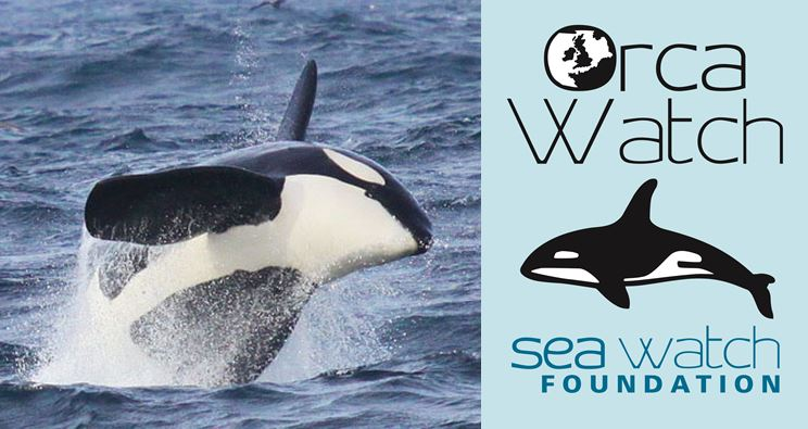 Orca Watch Logo Image