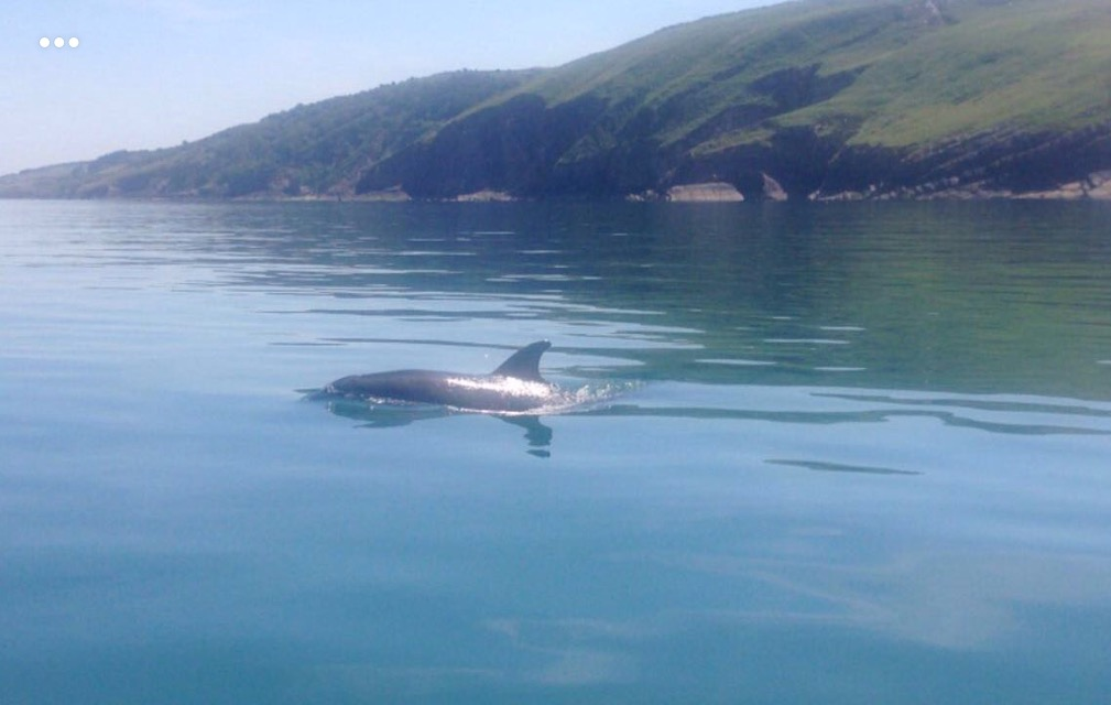 Just one of the close encounters on Tara's day survey. This was about 3 metres from the boat.