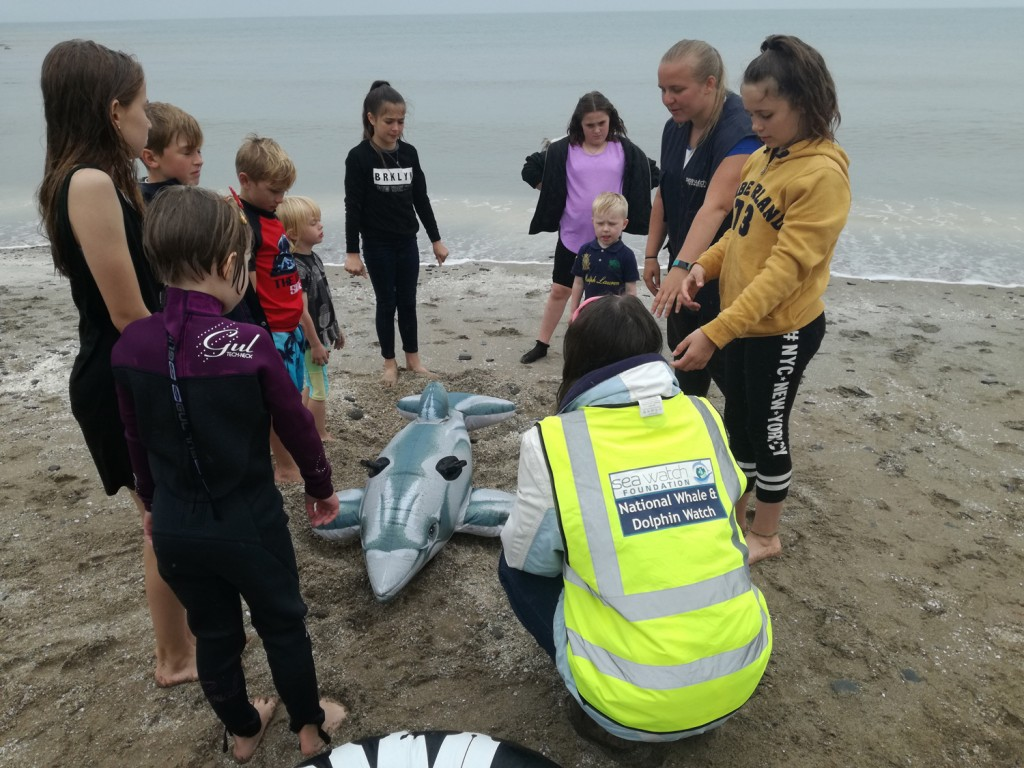'Daring Dolphin Rescue', learning how to help rescue stranded and entangled marine animals, during National Whale and Dolphin Watch 2017. Photo credit: Kathy James / Sea Watch Foundation.