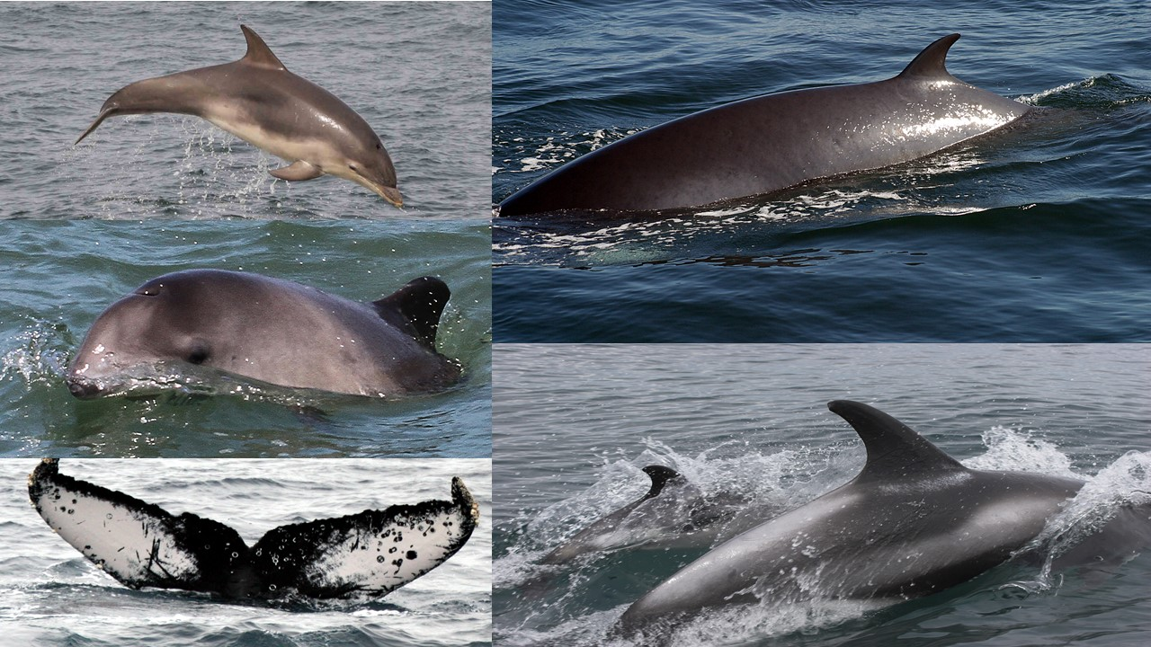 9427767b11e7 Sea Watch Foundation » National Whale and Dolphin Watch 2018