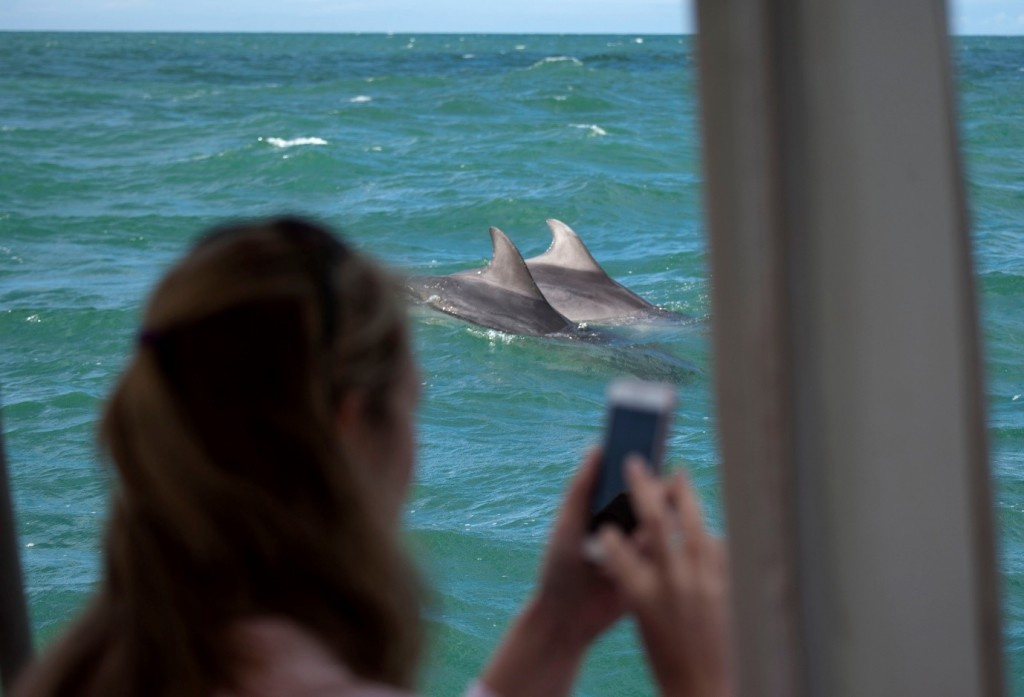 Bottlenose dolphins sighted off Cardigan Bay. Photo credit: Jonathan Evans/ Dolphin Spotting Boat Trips New Quay