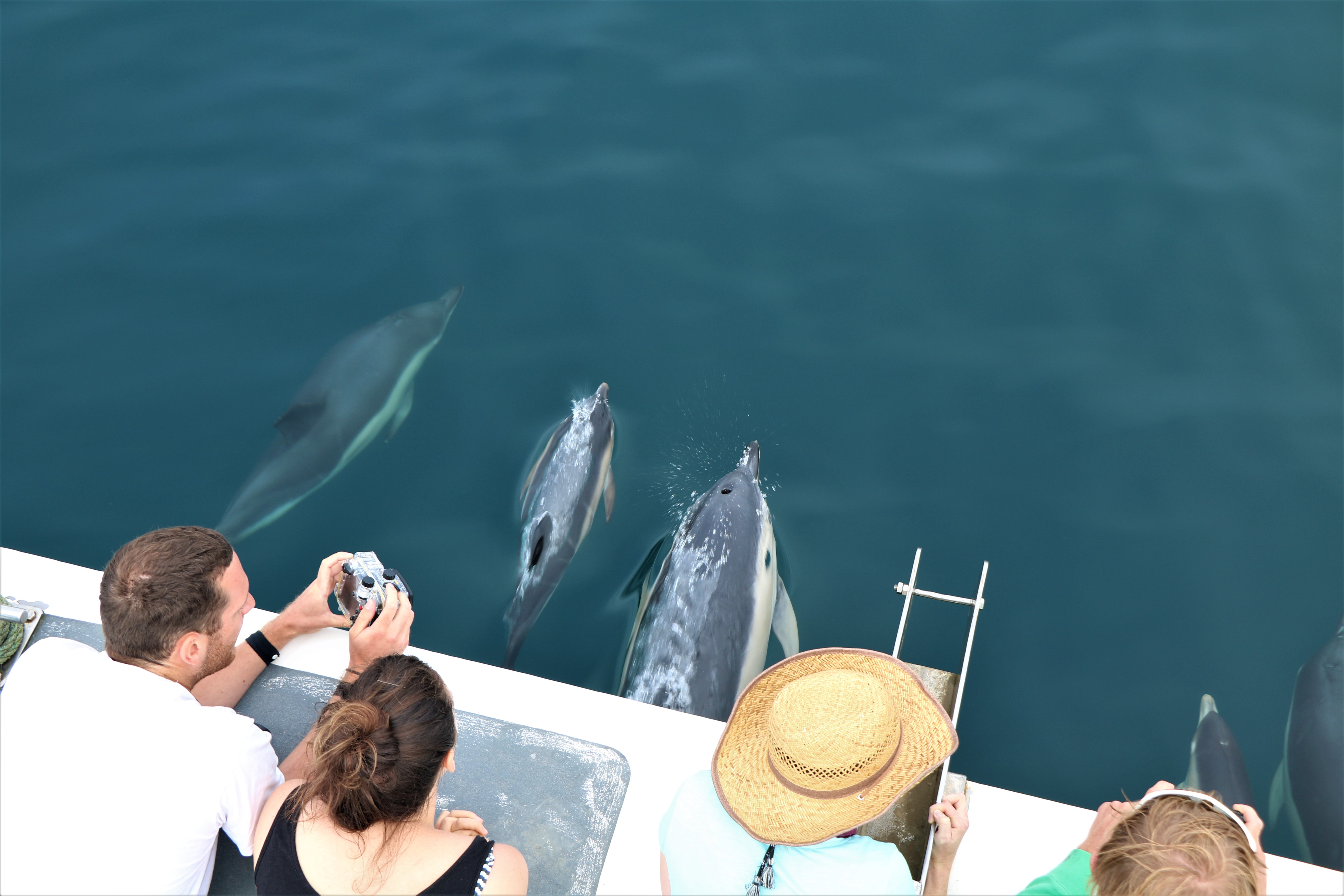 aaa5e10b9477 A pod of short-beaked common dolphins sighted on August 3rd in Newquay