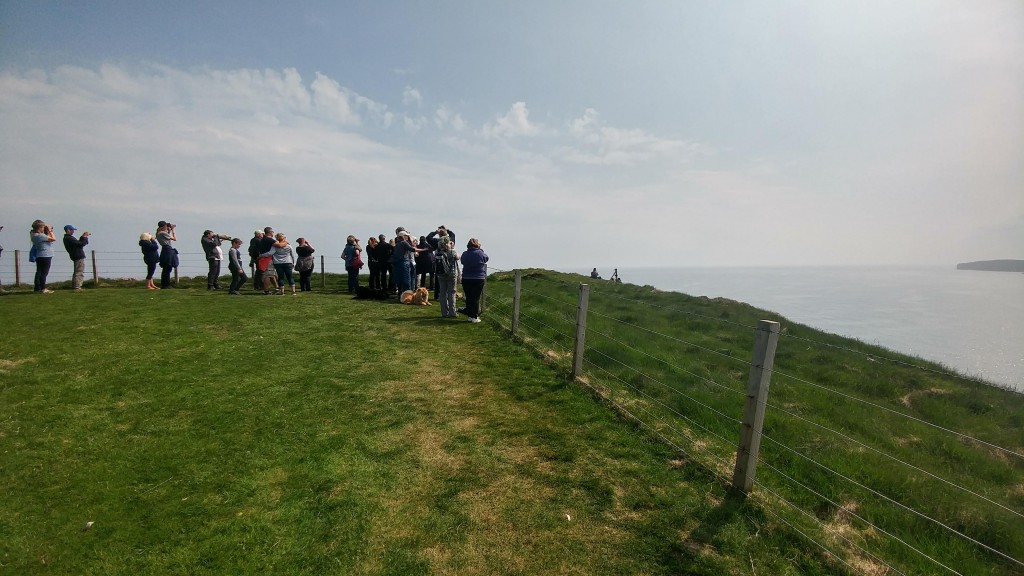 Orca Watch 2018. Orca Watchers looking our for whales and dolphins from Duncansby Head, Scotland. Photo credit: Chloe Robinson.