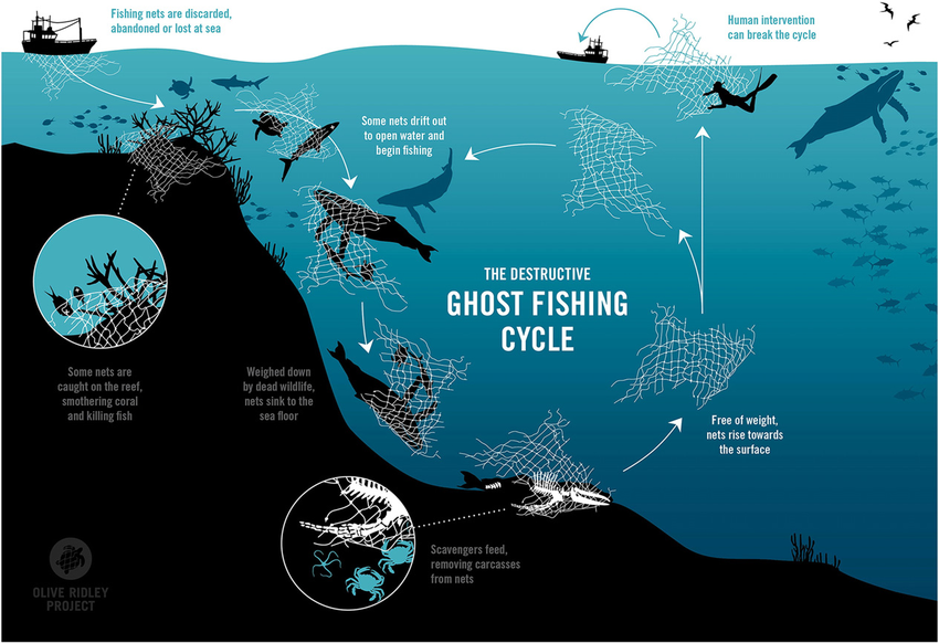 The destructive ghost fishing cycle. Credit to the Olive Ridley Project.