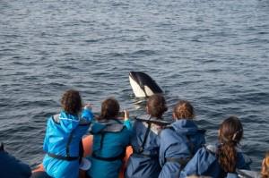 Entangled orca calf by the coast of Sagres, Algarve, Portugal.  Photo by Sul Informação