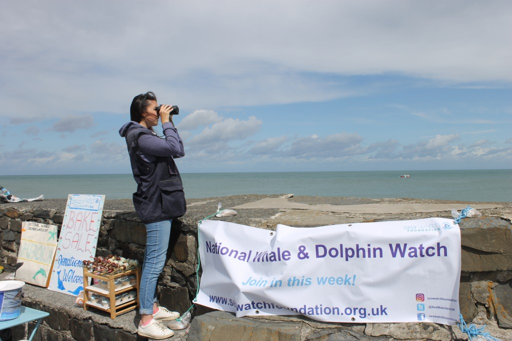 Sea Watch Interns looking out for whales and dolphins from New Quay harbour pier. Photo credit: Sea Watch Foundation.