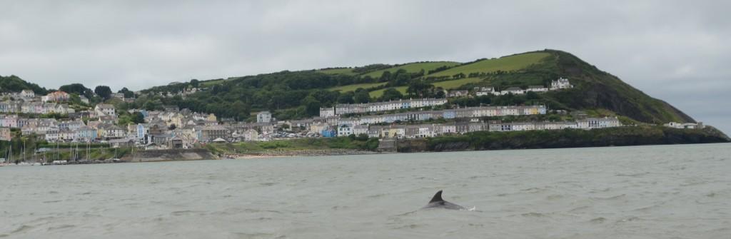 New Quay, Wales. Photo credit: Chiara G. Bertulli / Sea Watch Foundation.
