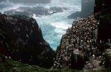 Seabird Colonies